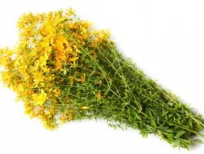 Зверобой: витаминный комплекс от природы