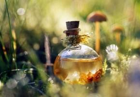 Чем полезно масло чайного дерева